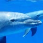 Dolphins in Hurghada