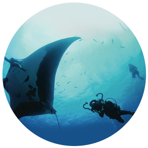 PADI Project-Aware Spezialist